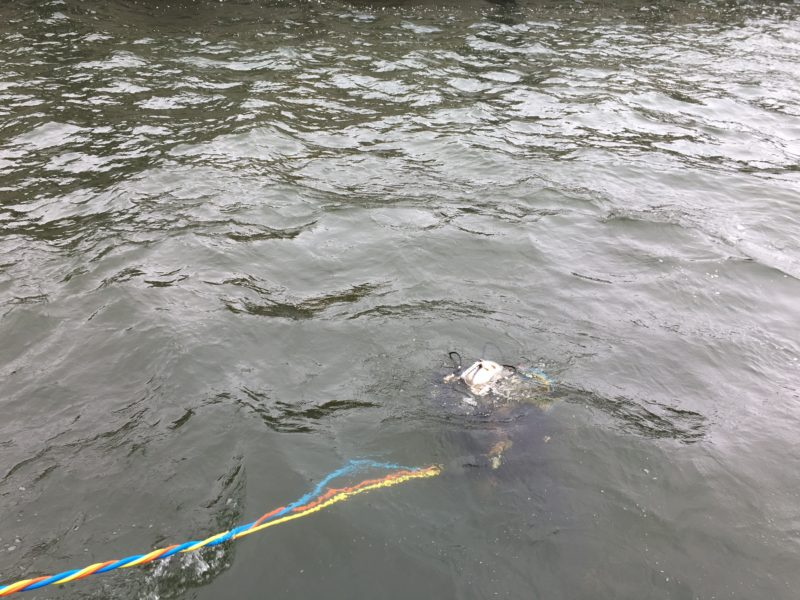 Duiker onderwater Volkeraksluizen
